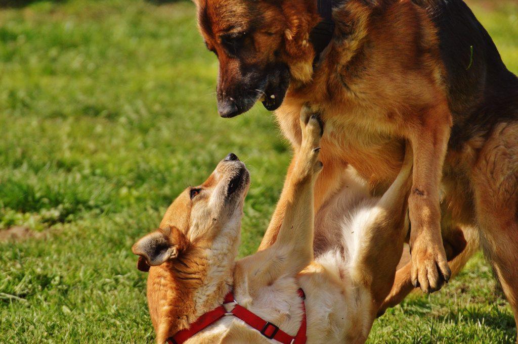 Herkennen van communicatie leer je bij B-Dog